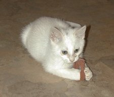 willow attacks a cat toy