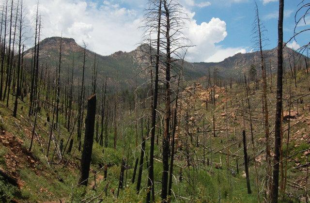 Hikers in Hayman fire burn area, near Goose Creek Trailhead, Lost Creek Wilderness
