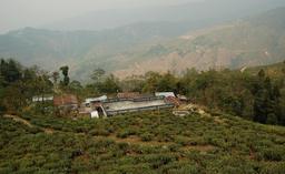 Tea plantation near Darjeeling