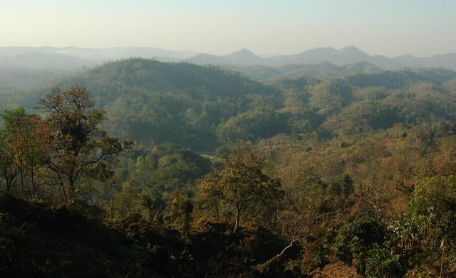 Jungle hillside, East Garo Hills, Meghalaya