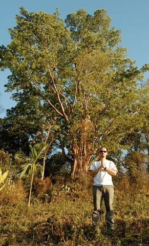 Jaeger with the great banyan tree
