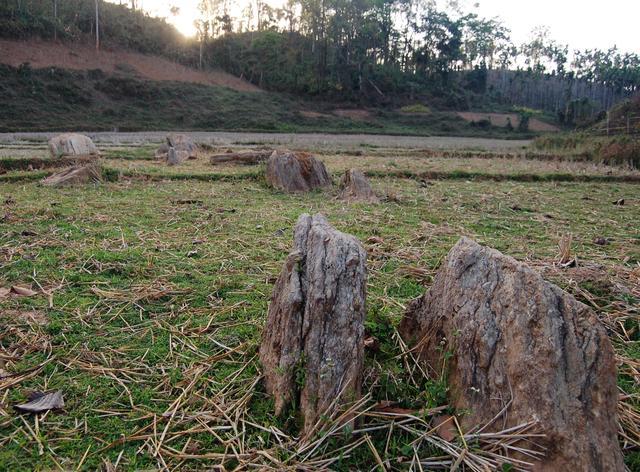 Rice paddies, East Garo Hills, Meghalaya