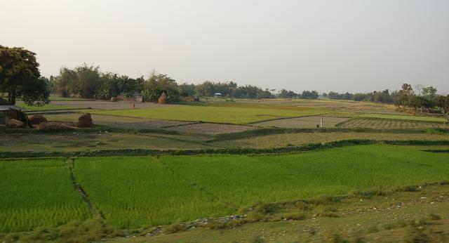 West Bengal farmland