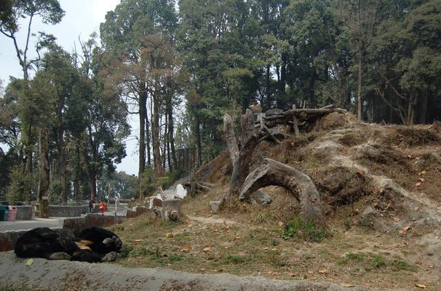 Asiatic Black Bear habitat at Padmaja Naidu Himalayan Zoological Park