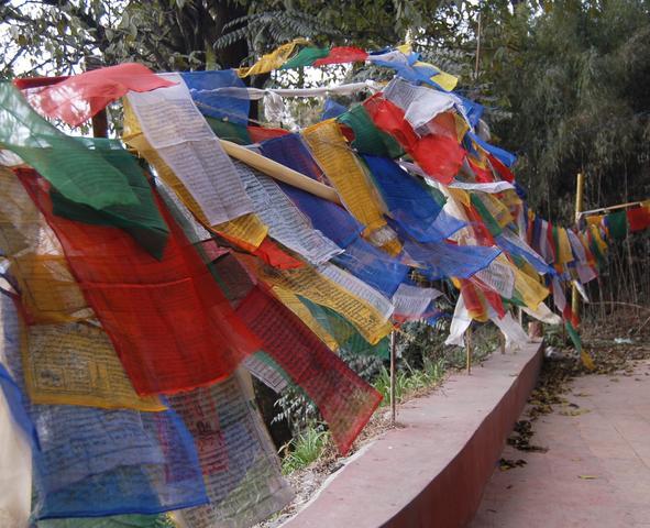 Prayer flags at Yiga Cholling Gompa