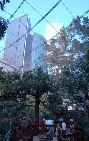 Urban jungle: Bank of China tower above the aviary at Hong Kong Park