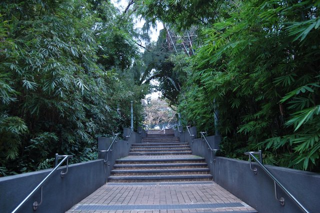 Bamboo-lined walkway in Victoria Park