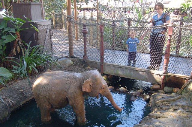 Calvin and Kiesa watch an animatronic elephant at the Tarzan exhibit