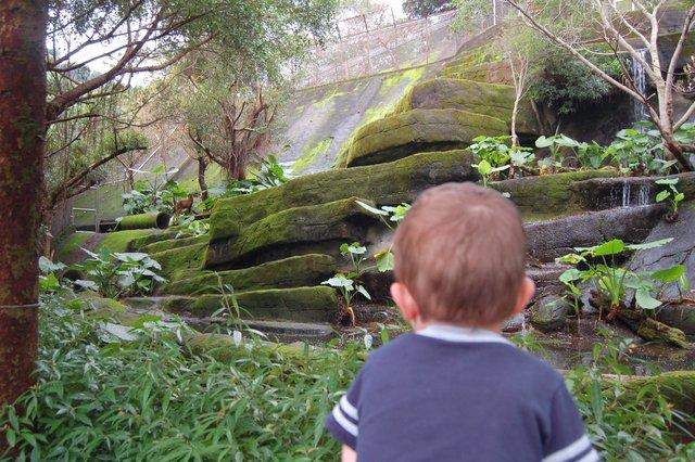 Calvin looks at the deer habitat at the Taipei Zoo