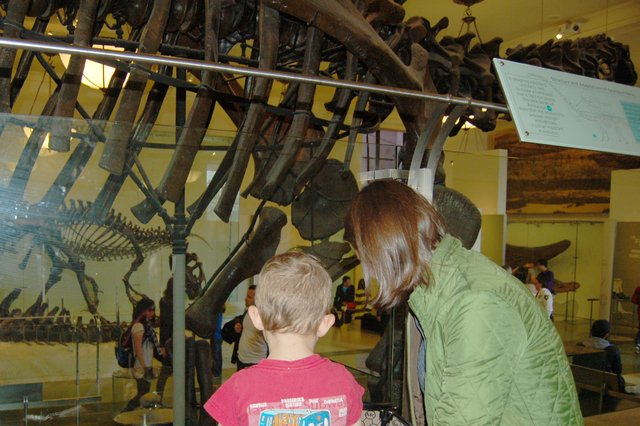 Calvin and Aunt Bethany look at dinosaurs at the American Museum of Natural History