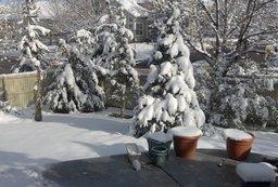 Back yard in snow in May
