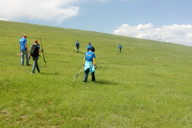 Hunting for invasive plants in Boulder County open space