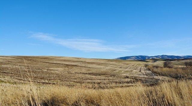 Fallow wheat field above Walla Walla