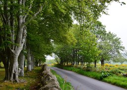 Country lane at Clava Cairns