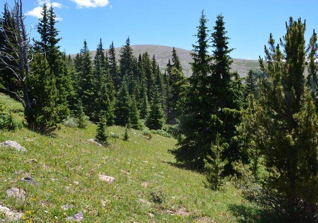 Mount Logan through the trees