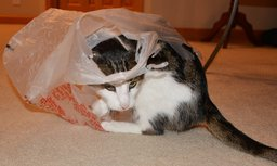 Jaden plays with a plastic bag (
