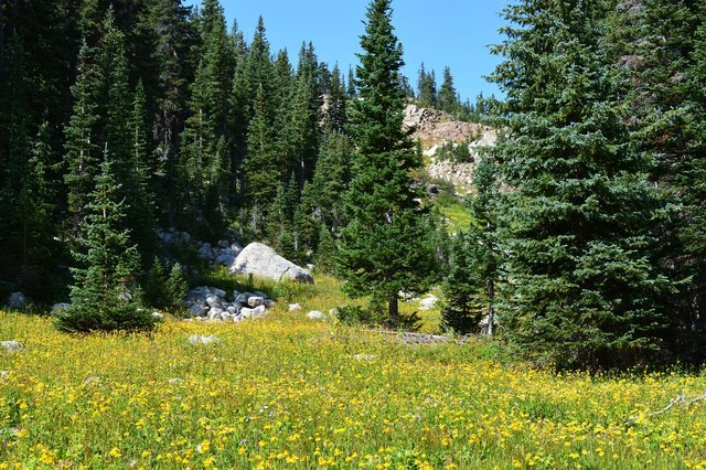 Meadow in upper St. Vrain Valley