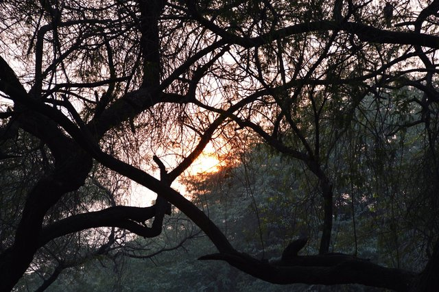 Setting sun through the haze and trees at National Zoological Gardens, Delhi