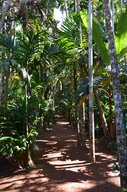 Path through the jungle at the Tropical Spice Plantation