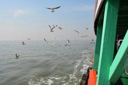 Seagulls stalk the ferry Al-Nawaz in Mumbai harbour
