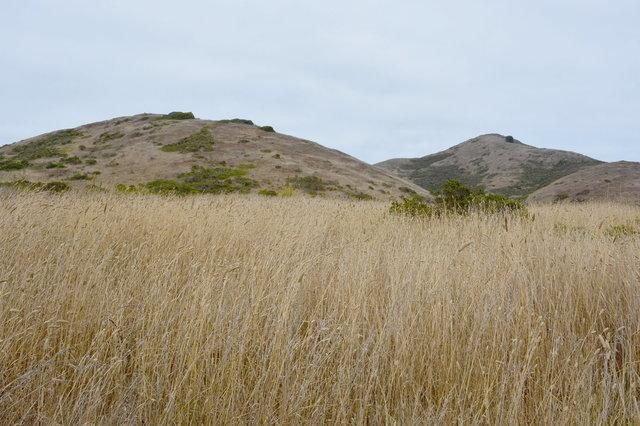 Golden hills in the Marin Headlands