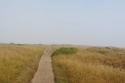 Trail to Tomales Point