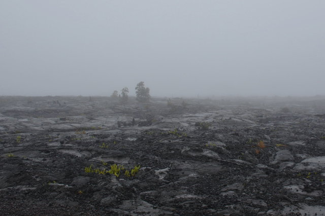 1969 lava flow shrouded in fog
