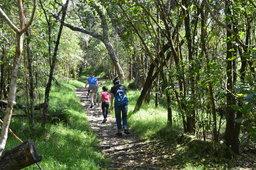 Kiesa, Calvin, and Sasa hike at Kipukapuaulu