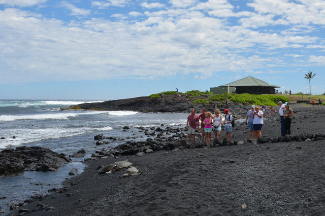 Tourists observe sea turtles on Punalu'u Black Sand Beach