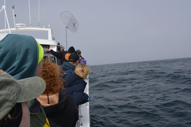 Whale-watching tourists search for whales in the Gulf of the Farallones
