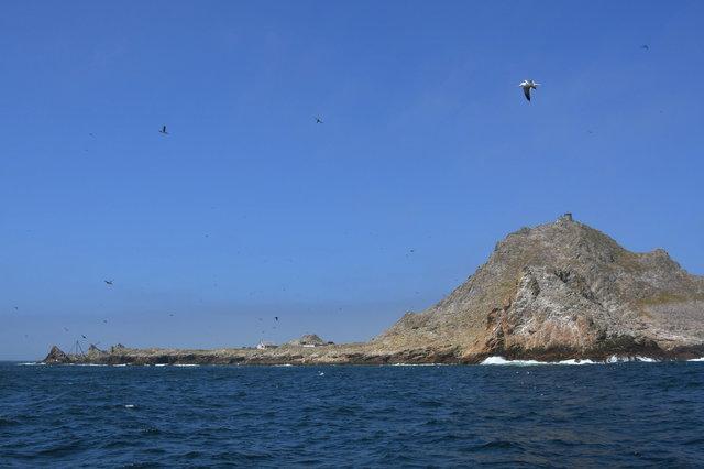 Birds at the Faralon Islands