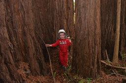 Julian in the redwoods