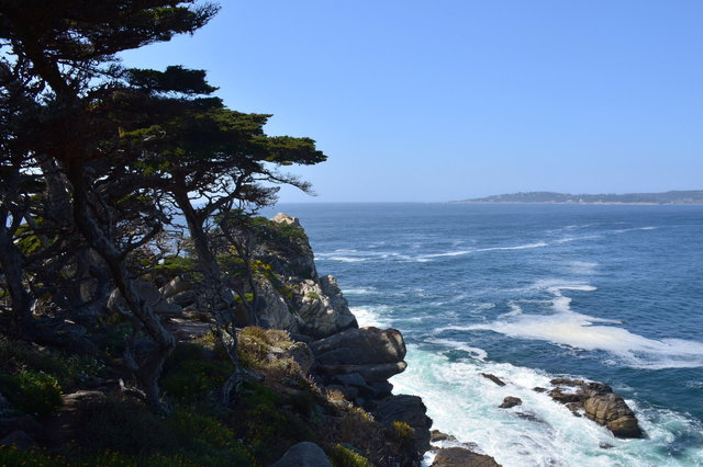 Monterey Pines over the Pacific Ocean at Point Lobos