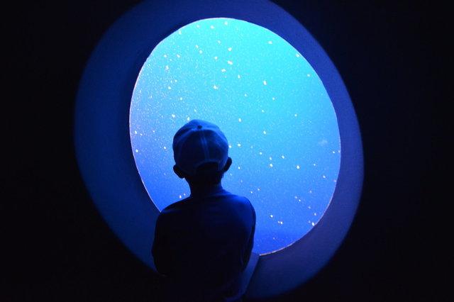 Calvin looks at tiny jellyfish at the Monterey Bay Aquarium