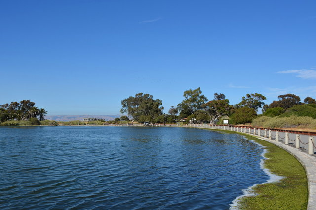 Duck pond at Palo Alto Baylands