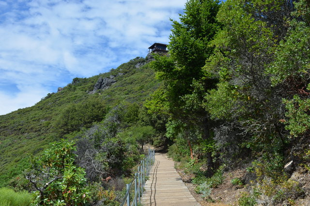 Trail leading to the summit of Mount Tam