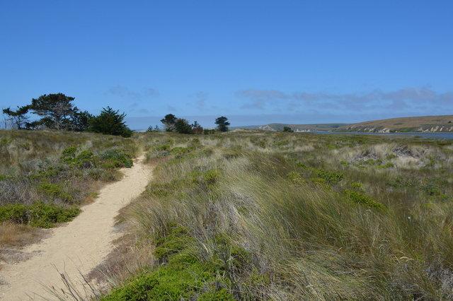 Trail running along Limantour Spit