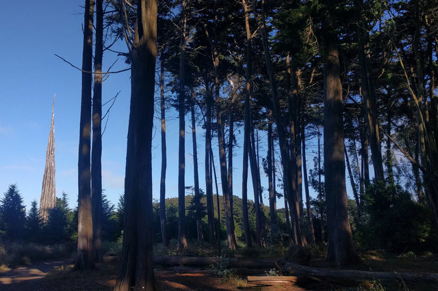 Andy Goldsworthy's Spire flanked by Monterey cypress trees