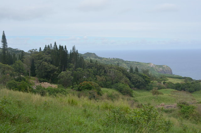 Hillside off the Waihe'e Ridge Trail