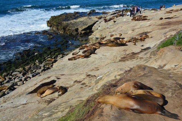 Sea lions lounge on the rocks at La Jolla