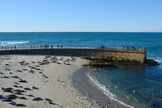Children's Pool, overrun by harbor seals