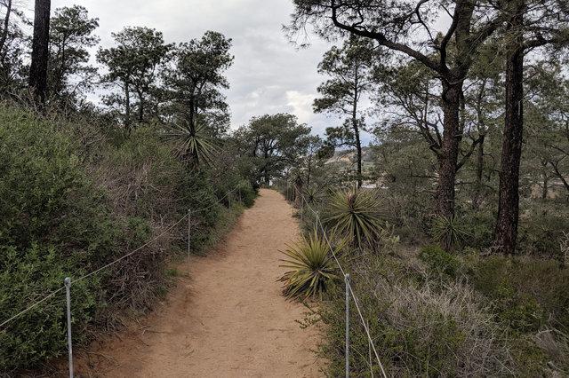 Trail at Torrey Pines State Preserve