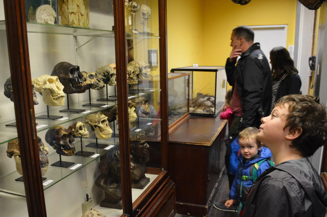 Calvin and Julian look at a display case filled with primate skulls and brains