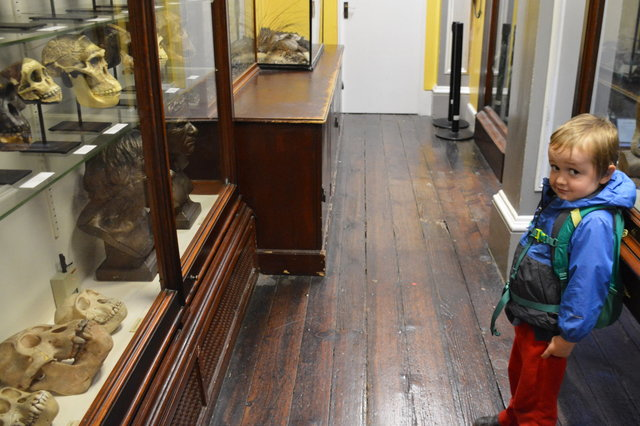 Julian is not sure what to make of the primate skulls in the display case