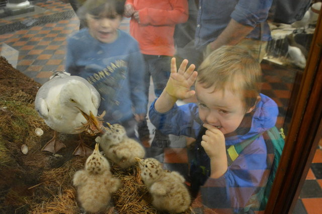 Julian looks at seagull chicks in a diaorama