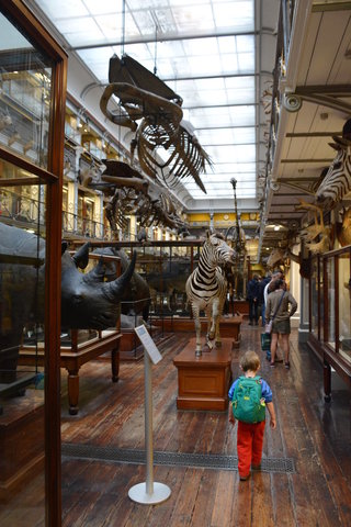 Julian walks through the International Animals Collection at the Irish National Museum of Natural History