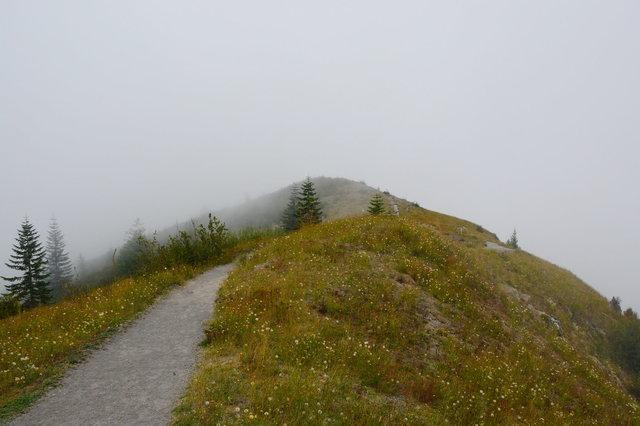Trail on Johnston Ridge in the fog