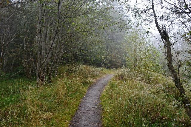 Trail leading through the hummocks