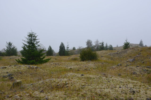Scenery of the hummocks