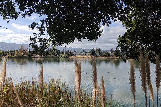Percolation ponds at Los Gatos Creek